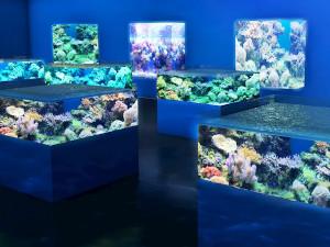 LED照明が水族館に採用
